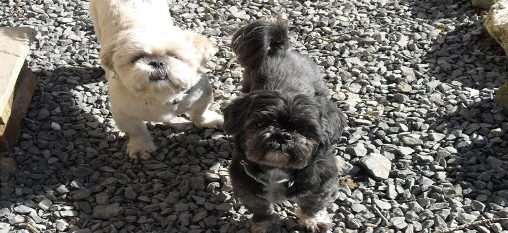 Doggy Day Care Pawsitve Petcare